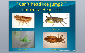 One lice