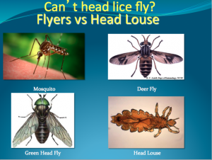 Can lice fly