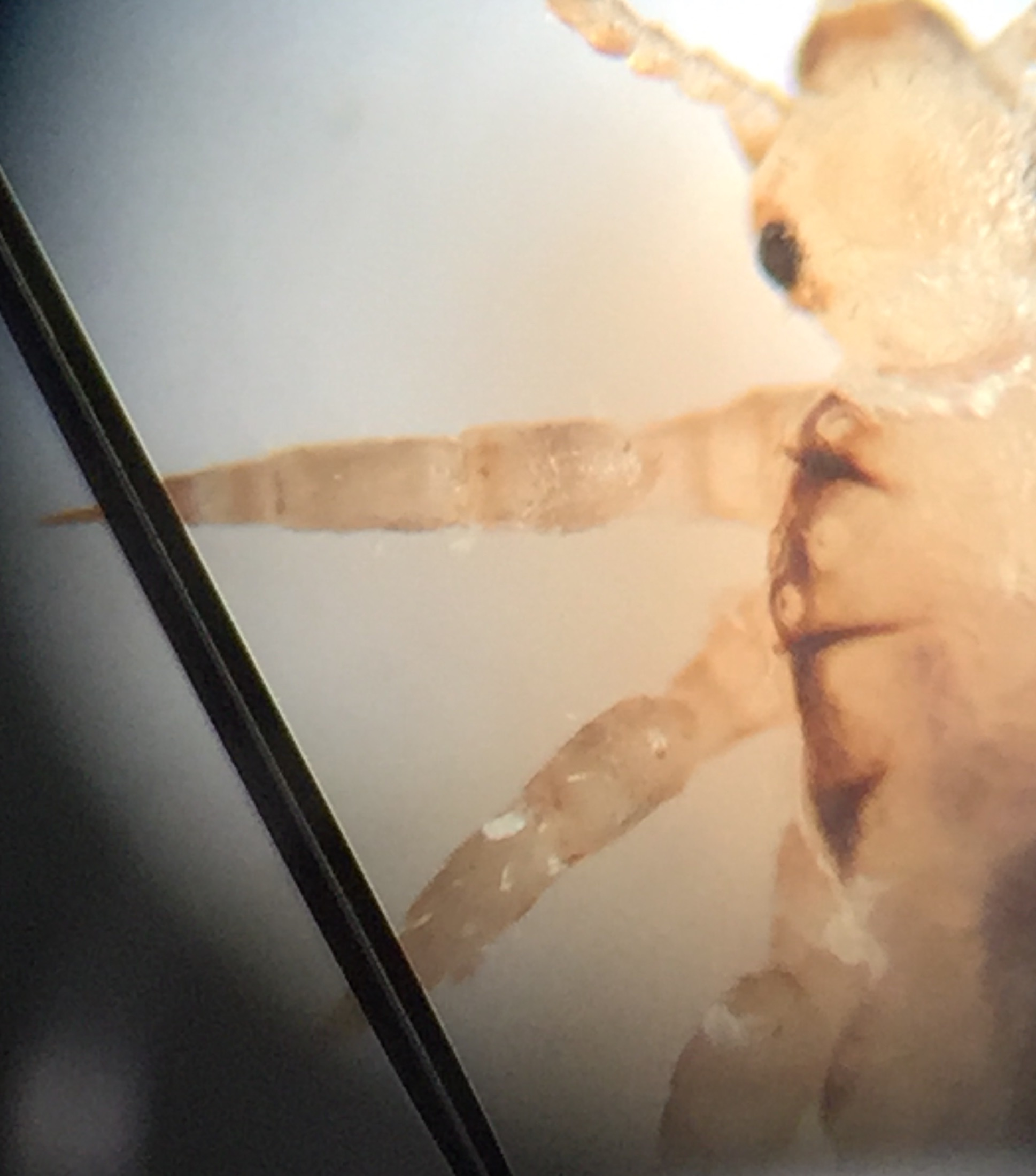 Head lice looking stuff in your hair? Nitwits 1st Best Lice